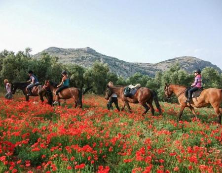 riding-holidays-andalucia-spain-cortijo-los-lobos-accommodation-bitless10