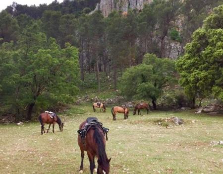 riding-holidays-andalucia-spain-cortijo-los-lobos-accommodation-bitless17