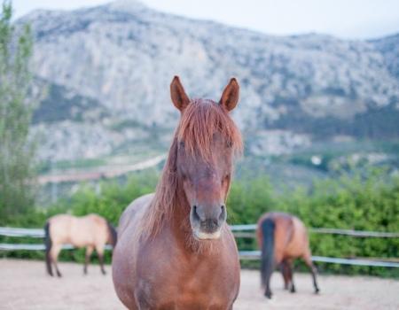 riding-holidays-andalucia-spain-cortijo-los-lobos-accommodation-bitless25