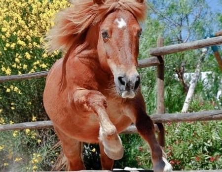 riding-holidays-andalucia-spain-cortijo-los-lobos-accommodation-bitless26