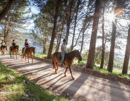 riding-holidays-andalucia-spain-cortijo-los-lobos-accommodation-bitless35