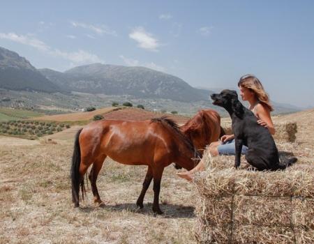 riding-holidays-andalucia-spain-cortijo-los-lobos-accommodation-bitless39
