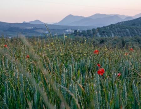 riding-holidays-andalucia-spain-cortijo-los-lobos-accommodation-bitless4