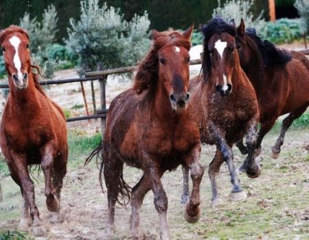 riding-holidays-andalucia-spain-cortijo-los-lobos-accommodation-bitless40