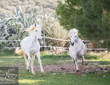 riding-holidays-andalucia-spain-cortijo-los-lobos-accommodation-bitless44