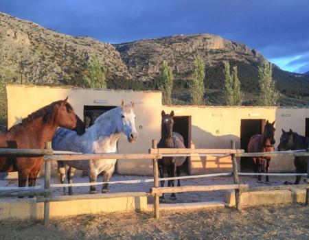 riding-holidays-andalucia-spain-cortijo-los-lobos-accommodation-bitless46