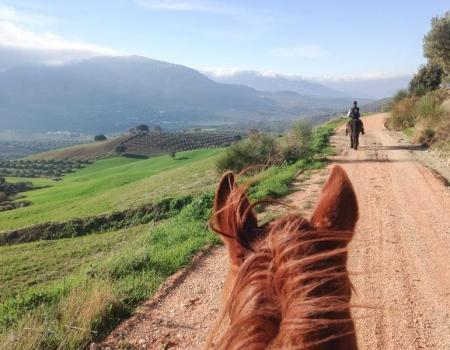 riding-holidays-andalucia-spain-cortijo-los-lobos-accommodation-bitless51
