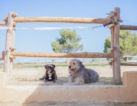 riding-holidays-andalucia-spain-cortijo-los-lobos-accommodation-bitless52