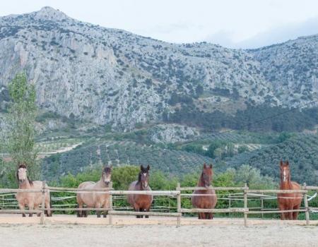 riding-holidays-andalucia-spain-cortijo-los-lobos-accommodation-bitless54