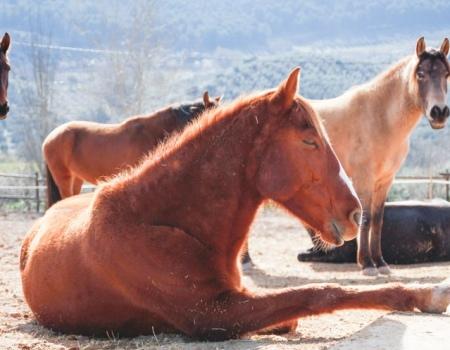 riding-holidays-andalucia-spain-cortijo-los-lobos-accommodation-bitless61