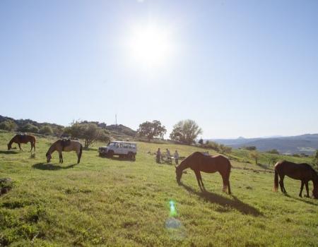riding-holidays-andalucia-spain-cortijo-los-lobos-accommodation-bitless63