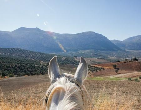 riding-holidays-andalucia-spain-cortijo-los-lobos-accommodation-bitless65