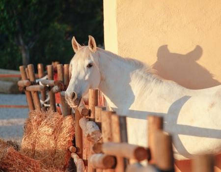 riding-holidays-andalucia-spain-cortijo-los-lobos-accommodation-bitless67