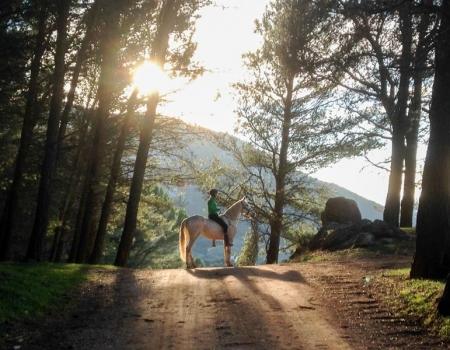 riding-holidays-andalucia-spain-cortijo-los-lobos-accommodation-bitless71