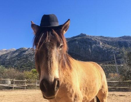 riding-holidays-andalucia-spain-cortijo-los-lobos-accommodation-bitless72