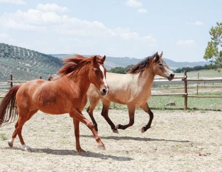 riding-holidays-andalucia-spain-cortijo-los-lobos-accommodation-bitless75