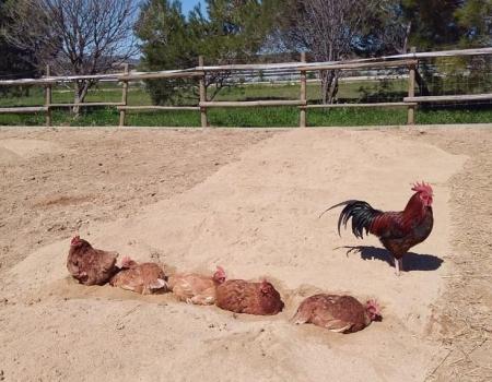 riding-holidays-andalucia-spain-cortijo-los-lobos-accommodation-bitless9