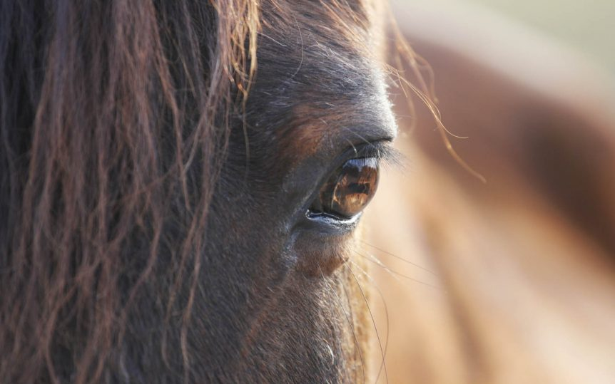 a close up photo of a horses' eye