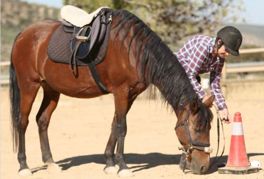 Horse agility courses in spain